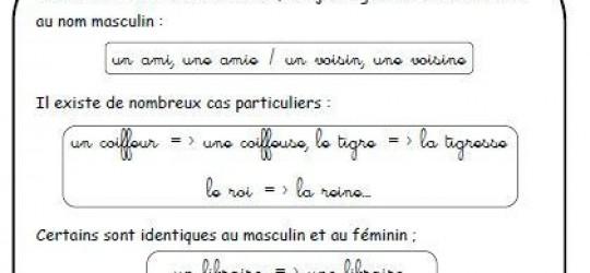 Féminin des noms – cours