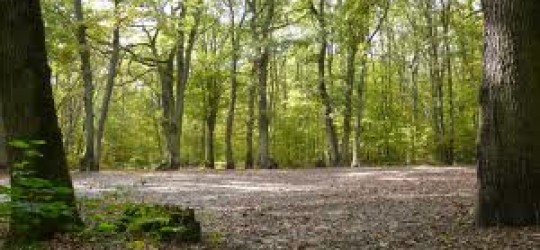 les forêts