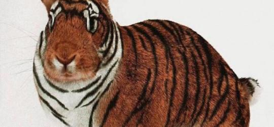 Le Lapin et le Tigre (un conte coréen)