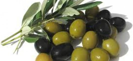 L'olive Texte narratif