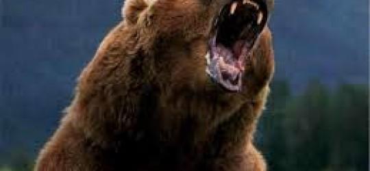 Un ours malheureux conte